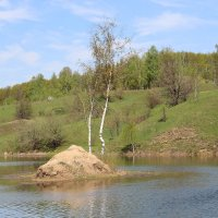 Берёзки на островке. :: Борис Митрохин