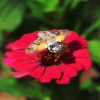 Бабочки бывают разные :: TATYANA PODYMA