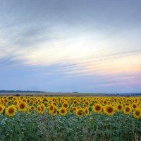 Вечерние краски. :: Дмитрий С... .