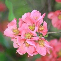 Цветочный хоровод-377. :: Руслан Грицунь