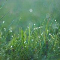 Трава в росе :: Седа Ковтун
