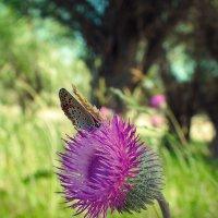 Бабочка :: Ольга Баганина