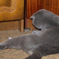 Кошки-мышки! :: Анатолий Сидоренков