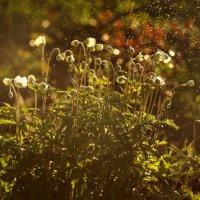 Первоцветы :: Татьяна Курамшина