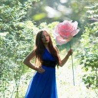 Нежная роза :: Марина Зиновьева