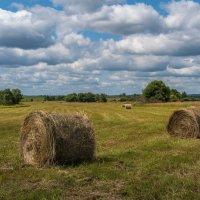 Псковская область. Заготовка сена :: Alexandre Andreev