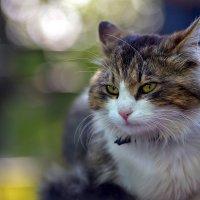 Кошачий взгляд :: Alexxxnyc