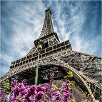 Париж...цветы...Эйфелева башня... :: Александр Вивчарик