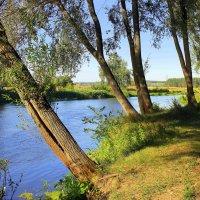 Растёт у реки плакучая ива. :: Валентина ツ ღ✿ღ