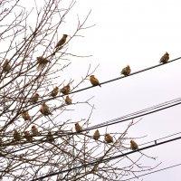 птичьи посиделки :: vg154
