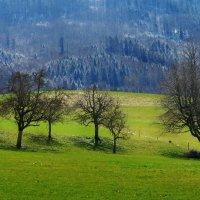 была Весна :: Elena Wymann