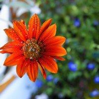Цветы августа :: nika555nika Ирина