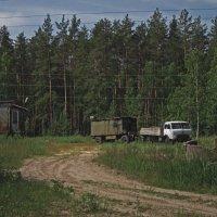 Где-то в лесу... :: Павел Зюзин