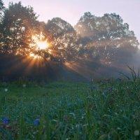 собирало солнце росы на рассвете :: Наталья Манусова