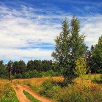 Дорога в лес :: Виктор Колмогоров