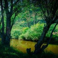 Река Олха :: Елена Малых