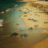 Берег выброшенных медуз :: Елена