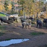 Осень в зоопарке :: Ольга