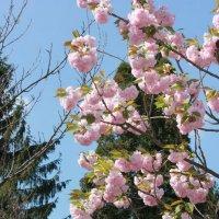 Цветочный хоровод-399. :: Руслан Грицунь