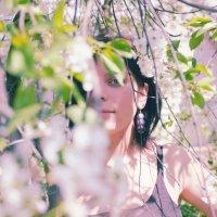 цветущие вишни :: Наталья Руссиян