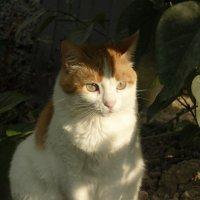 SunCat :: Миша Кравец