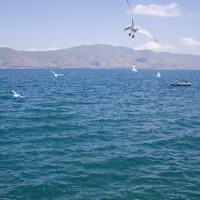 чайки :: Satenik Smbatyan