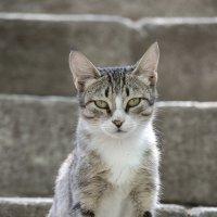 Просто кот... :: Денис Финягин