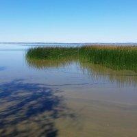 4 августа, озеро Разна (1) :: Юрий Бондер