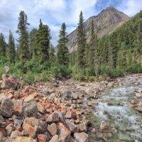 Валуны поросшие красным лишайником на берегу горной реки :: Виктор Никитин