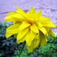 Золото августа . :: Мила Бовкун