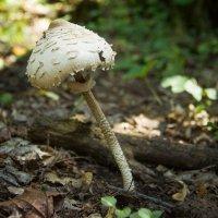 В лесу :: Анна Суслова