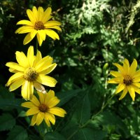 Солнечный август... :: Тамара (st.tamara)