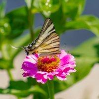 Крымские бабочки... :: Ардалион Иволгин