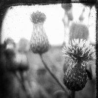 Цветы :: Caша Джус