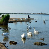 Тихое утро на озере :: Ольга Голубева