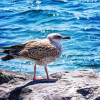 Чайка :: Евгений Петерс