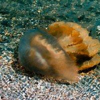медуза :: Наталья Крюкова