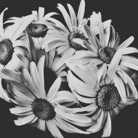 в черно-белом :: Любовь Космачева