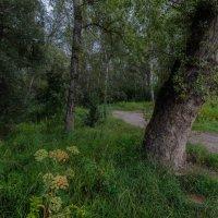 В лесу :: Евгений Герасименко