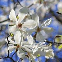 Цветочный хоровод-415. :: Руслан Грицунь