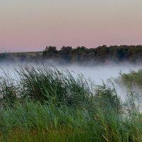 Утрений туман :: Aleksandr Geraimovich