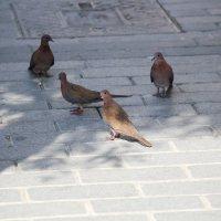 pigeons :: Ekat Grigoryeva