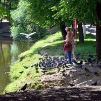 Кормление птиц. :: Oleg4618 Шутченко
