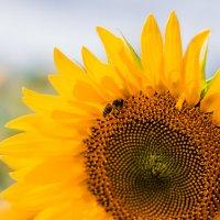 Пчелка :: Dinara Nebaraeva