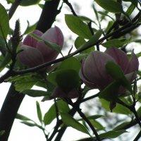 Цветочный хоровод-417. :: Руслан Грицунь