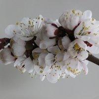 Цветочный хоровод-425. :: Руслан Грицунь