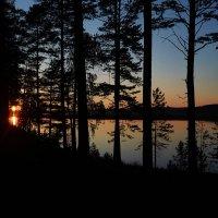 Лес у Ангары, Иркутская область :: Яна Васильева