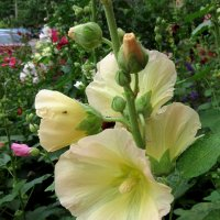 В саду :: Larisa