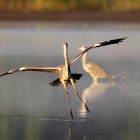 танцы на воде! :: Борис E