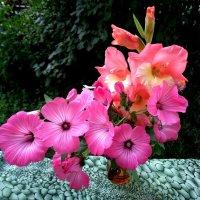 Цветы :: Милла Корн